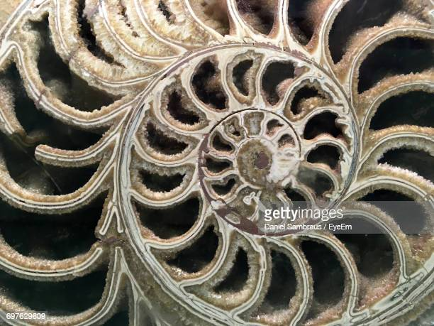 full frame shot of ammonite fossil - ammonite stock photos and pictures