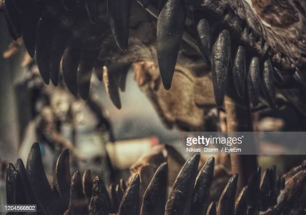 full frame shot of an teeth of a dinosaur - dinosaur stock pictures, royalty-free photos & images