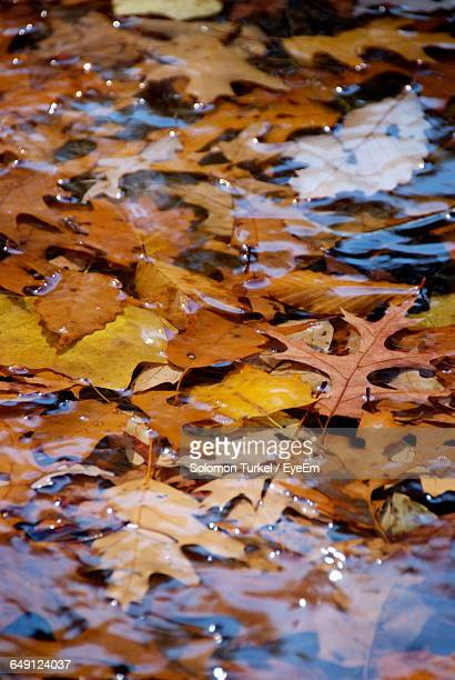 full frame shot of autumn leaves floating in lake - solomon turkel stock pictures, royalty-free photos & images