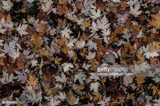 full frame shot of autumn leaves - matthias gaberthüel stock-fotos und bilder