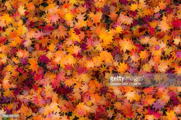 full frame shot of autumn leaves - fall background stock photos and pictures