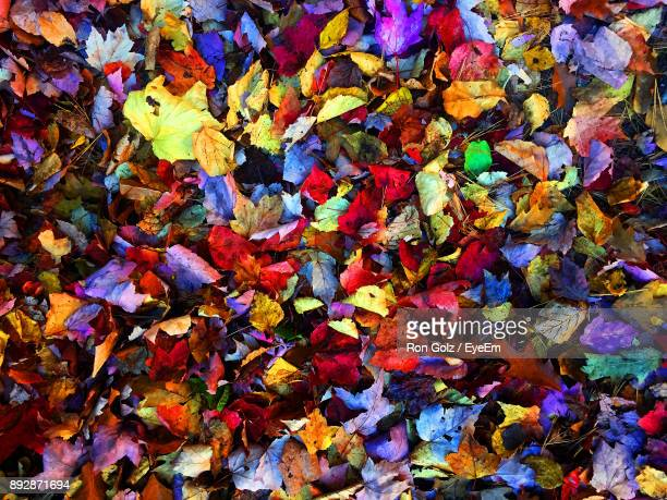 Full Frame Shot Of Autumn Leaves