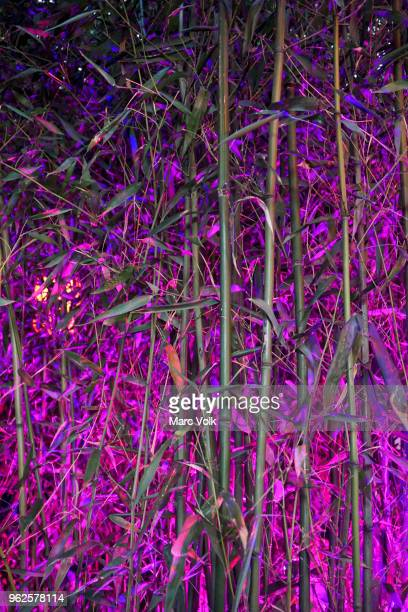 full frame shot of bamboo grove at night - grove_(nature) stock pictures, royalty-free photos & images