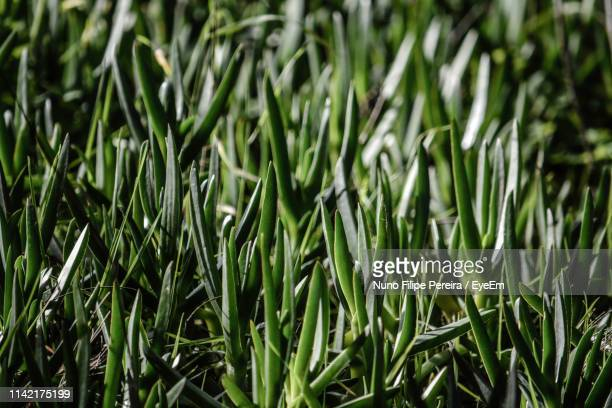 60 Top Grass Blade Texture Pictures, Photos and Images - Getty Images
