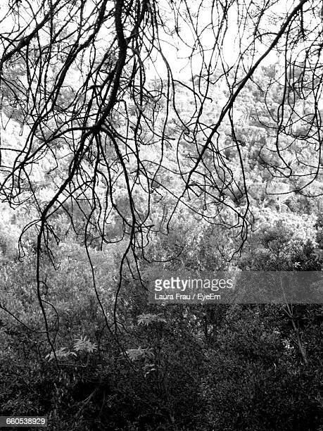 full frame shot of bare trees in foggy weather - laura woods stock pictures, royalty-free photos & images