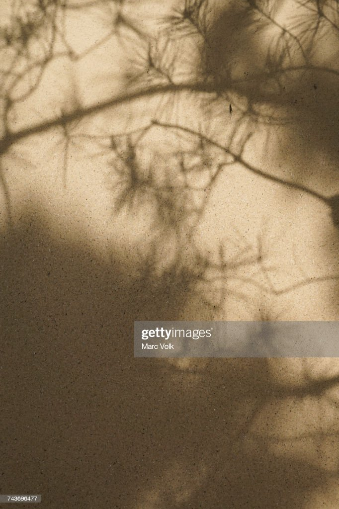 Full frame shot of beige wall with shadows : Photo