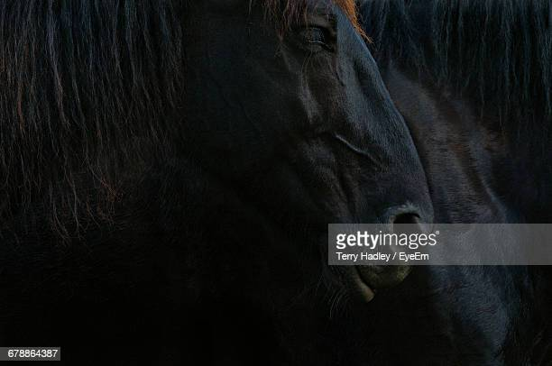 Full Frame Shot Of Black Horse