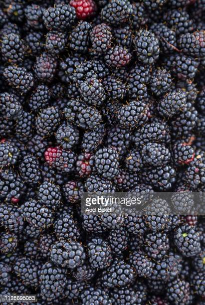 full frame shot of blackberries - blackberry fruit stock pictures, royalty-free photos & images