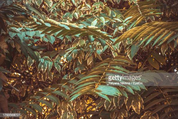 full frame shot of branches of leaves on tree - nikitina stock pictures, royalty-free photos & images