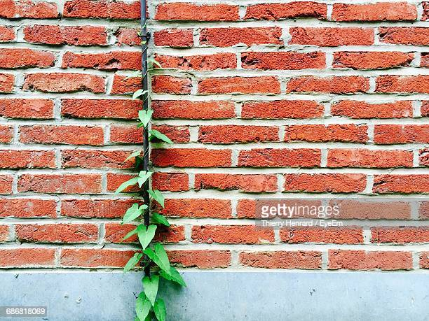 Full Frame Shot Of Brick Wall And Ivy Crawling Up A Pipe