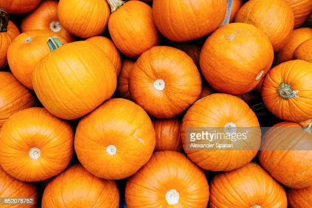 Full frame shot of bright orange pumpkins