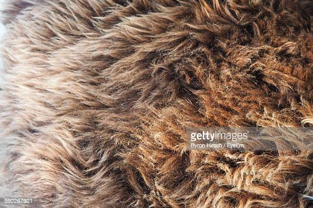 Full Frame Shot Of Brown Fur