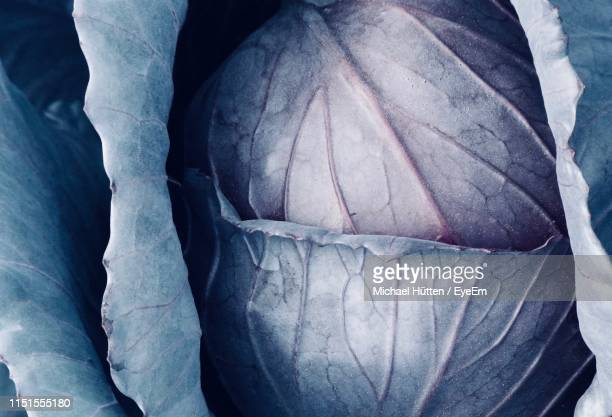 full frame shot of cabbage - cabbage family stock photos and pictures