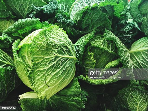 full frame shot of cabbages - cabbage stock pictures, royalty-free photos & images