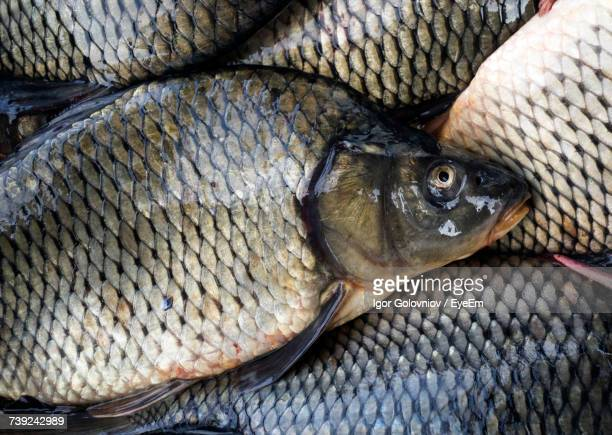 full frame shot of carps for sale at fish market - igor golovniov stock pictures, royalty-free photos & images
