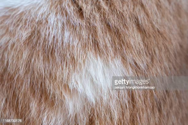 full frame shot of cat hair - 毛皮 ストックフォトと画像