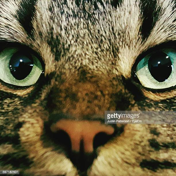 full frame shot of cat - kitty patterson stock pictures, royalty-free photos & images