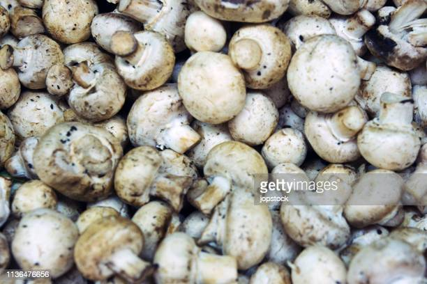Full frame shot of champignon mushrooms