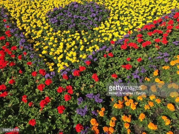 Full Frame Shot Of Colorful Flowers In Garden