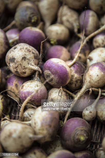 full frame shot of common beets - marty hardin stock photos and pictures