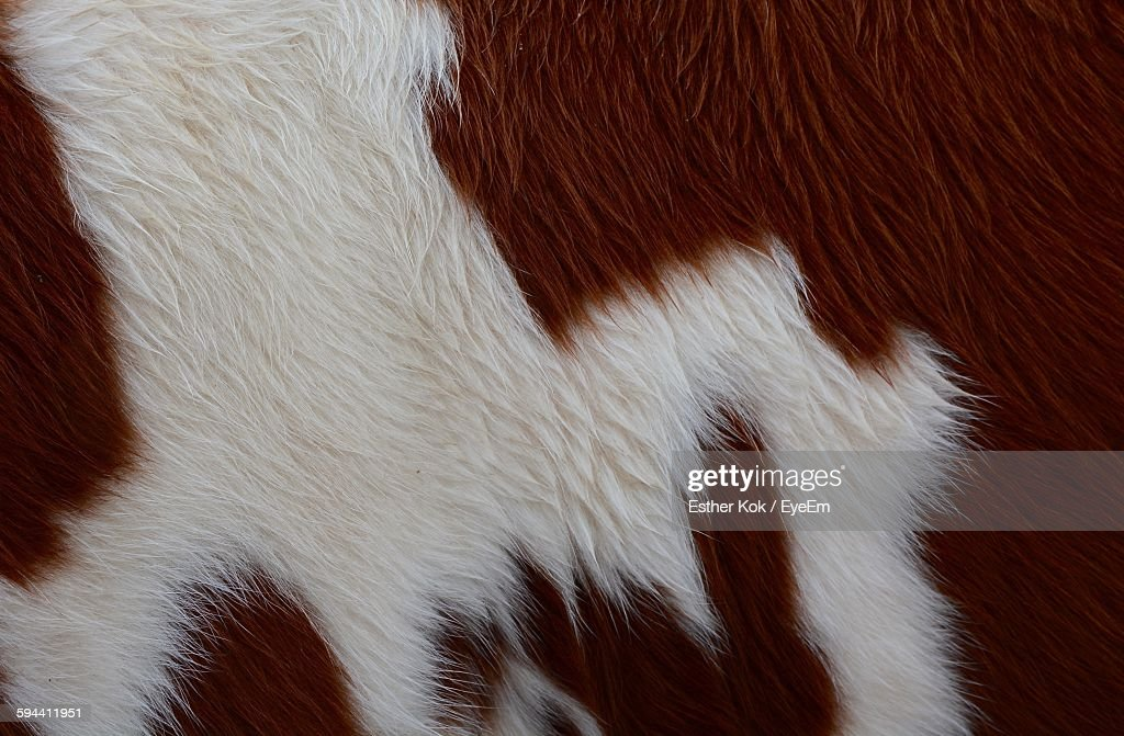 Full Frame Shot Of Cow Hair : Stock-Foto