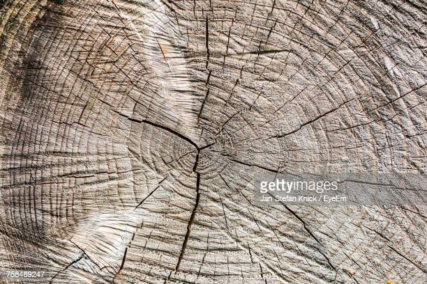 Full Frame Shot Of Cracked Tree Stump