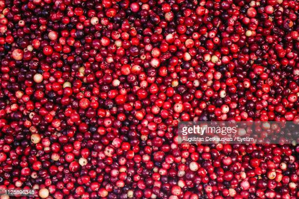 full frame shot of cranberries - cranberry stock pictures, royalty-free photos & images