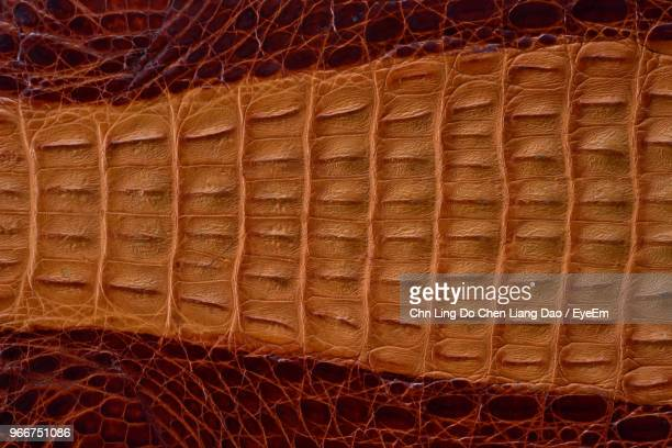 full frame shot of crocodile leather - reptile leather stock pictures, royalty-free photos & images