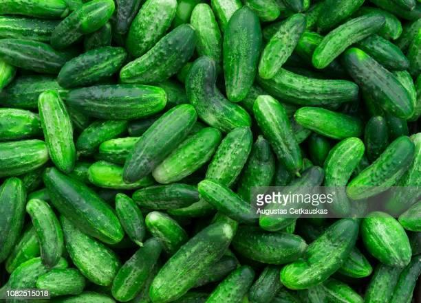 full frame shot of cucumbers for sale at market - gurke stock-fotos und bilder