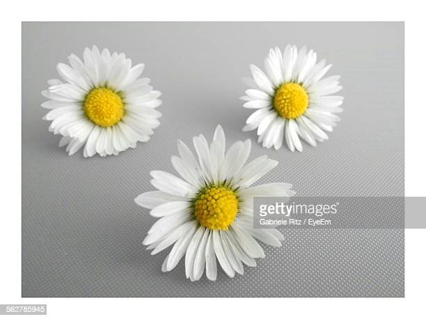 Full Frame Shot Of Daisies On Wall