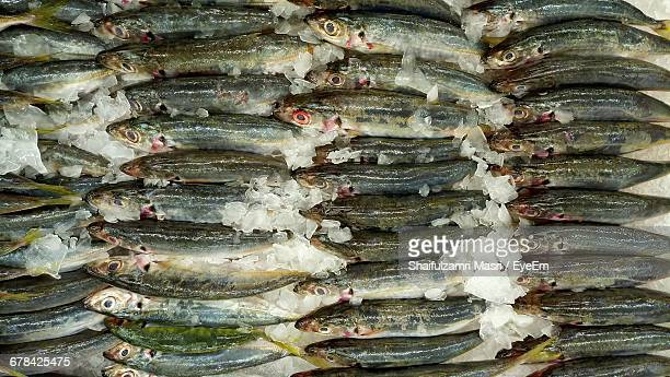 full frame shot of dead fish in ice at market stall - shaifulzamri eyeem stock pictures, royalty-free photos & images