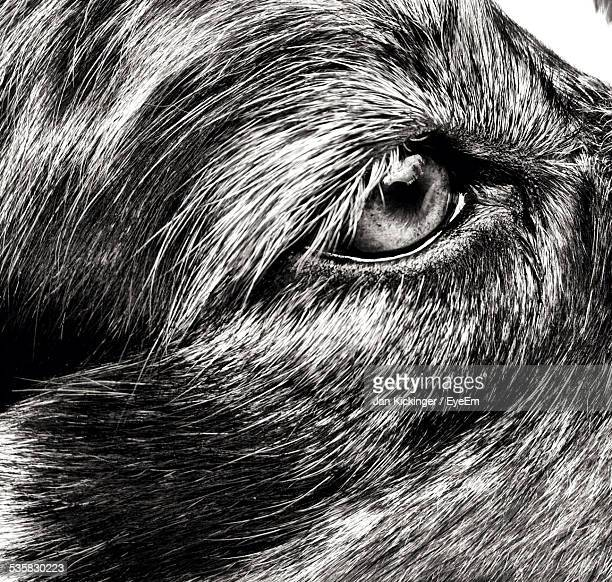 Full Frame Shot Of Dog Eye
