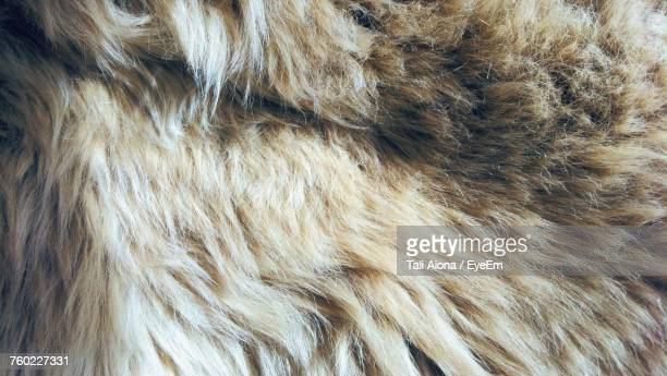 Full Frame Shot Of Dog Fur