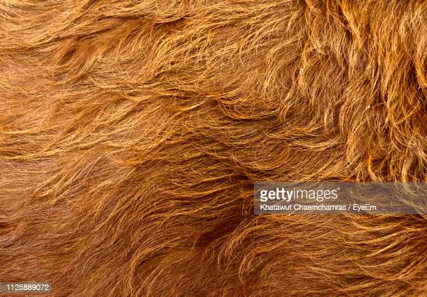 full frame shot of dog hair - fur stock pictures, royalty-free photos & images