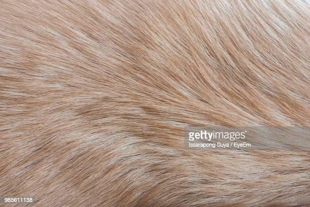 Full Frame Shot Of Dog Hair