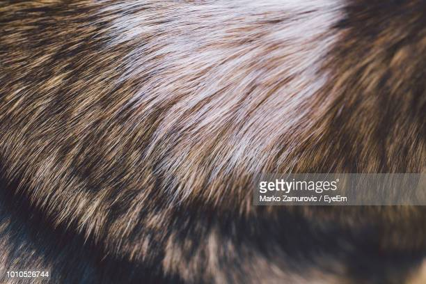 full frame shot of dog - animal hair stock pictures, royalty-free photos & images