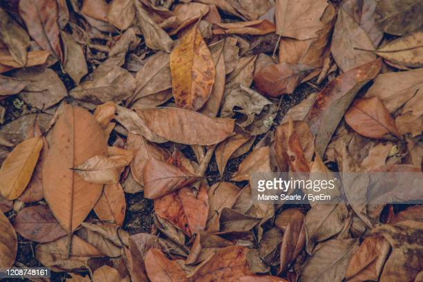 full frame shot of dried autumn leaves on field - cambridge new zealand stock pictures, royalty-free photos & images