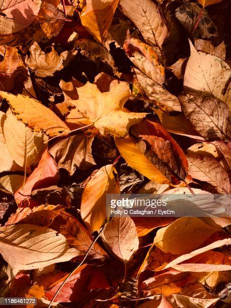 full frame shot of dried autumn leaves - dalkey stock pictures, royalty-free photos & images