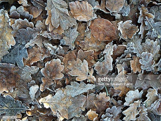 Full Frame Shot Of Dry Frozen Leaves