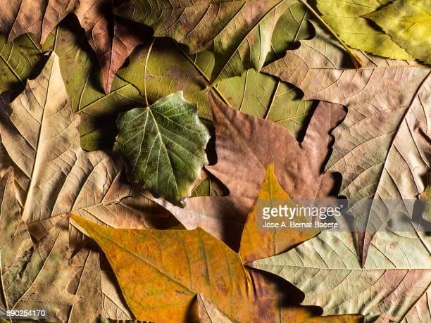 Full frame shot of dry leaves, natural  pattern. Spain