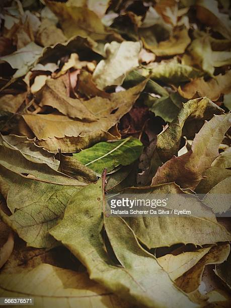 Full Frame Shot Of Dry Leaves On Field