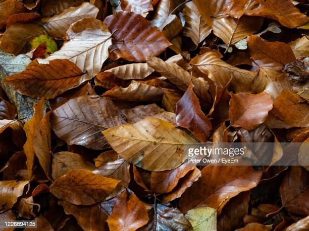 full frame shot of dry leaves - brown stock pictures, royalty-free photos & images