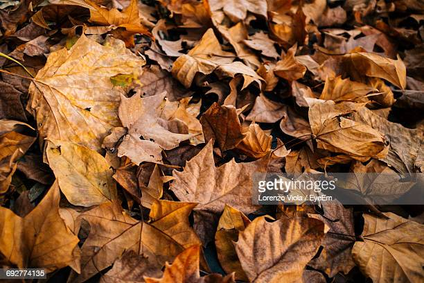 Full Frame Shot Of Dry Leaves