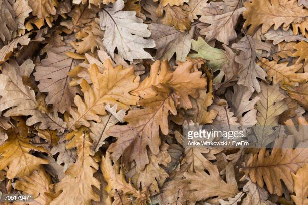 Full Frame Shot Of Dry Oak Leaves