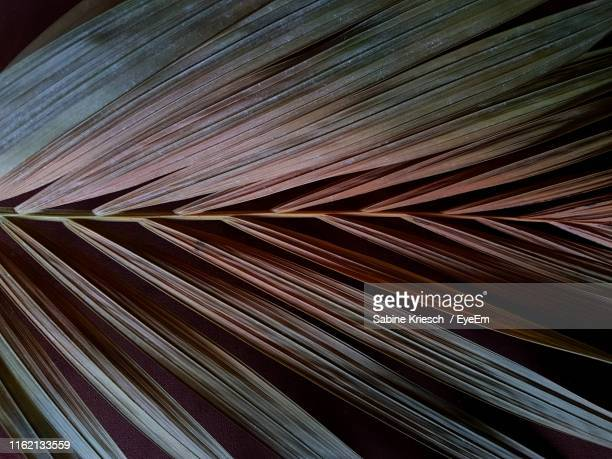 full frame shot of dry palm leaves - sabine kriesch stock-fotos und bilder