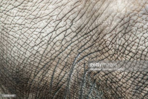 Full Frame Shot Of Elephants Skin