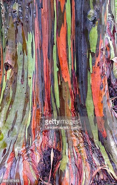 Full Frame Shot Of Eucalyptus Tree