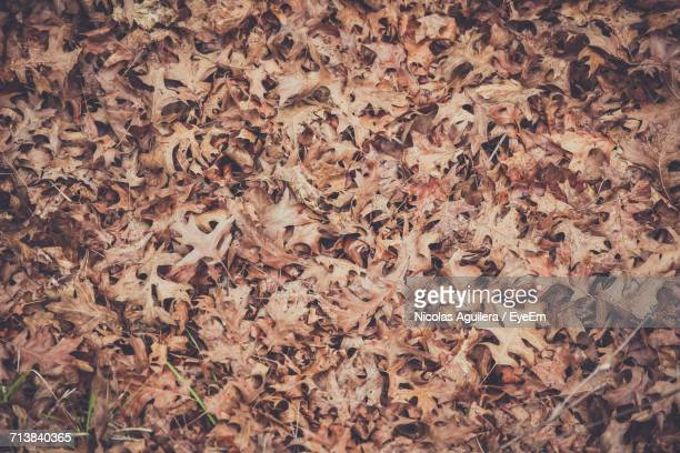 Full Frame Shot Of Fallen Dry Leaves During Autumn