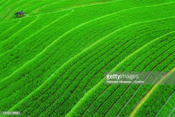 full frame shot of farm - rahmad himawan stock pictures, royalty-free photos & images