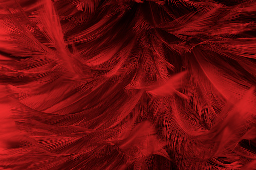 Full Frame Shot Of Feathers - gettyimageskorea